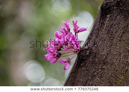 紫色 木の幹 草 緑の草 赤い花 ツリー ストックフォト © curaphotography