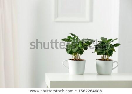 verde · maceta · fondos · rosa · contenedor · frescos - foto stock © shutswis