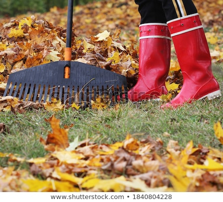 Woman gathering fallen leaves with rake Stock photo © photography33
