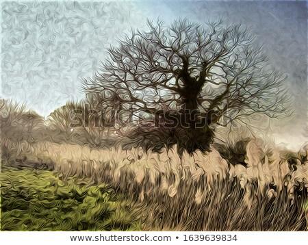 Stock photo: Oaks near the reeds