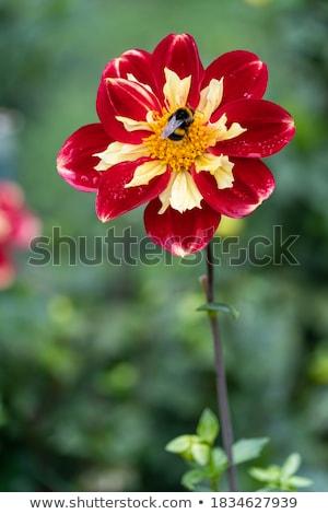 Foto d'archivio: Ape · fiore · raccolta · polline · cielo · fiori