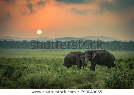 Two elephants landscape stock photo © ottoduplessis