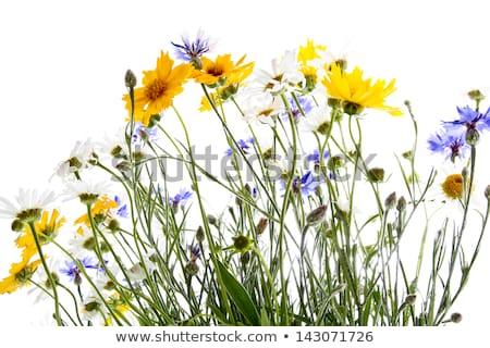 Yellow and purple wildflowers Stock photo © ottoduplessis