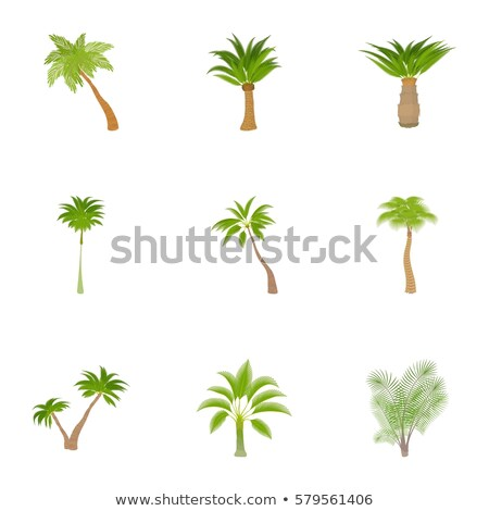 Nove immagini palme Palm verde pattern Foto d'archivio © Ustofre9