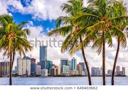 Centrum Miami Florida USA zee gebouwen Stockfoto © phbcz