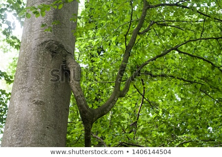 лес старые дерево трава природы пейзаж Сток-фото © hanusst