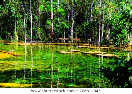 Hot-Spring Pool in Tropical Forest Stock photo © Discovod
