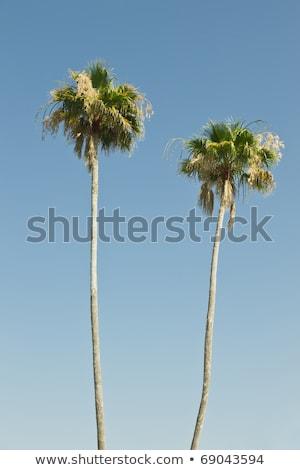 два пальмами Blue Sky небе пейзаж морем Сток-фото © Zhukow