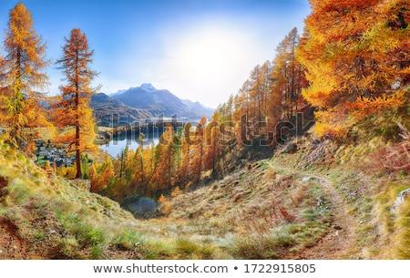 山 · 村 · 午前 · 風景 · 夏 · 美しい - ストックフォト © kotenko
