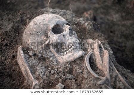 humanismo · crânio · osso · cabeça · morto · dentes - foto stock © mayboro1964