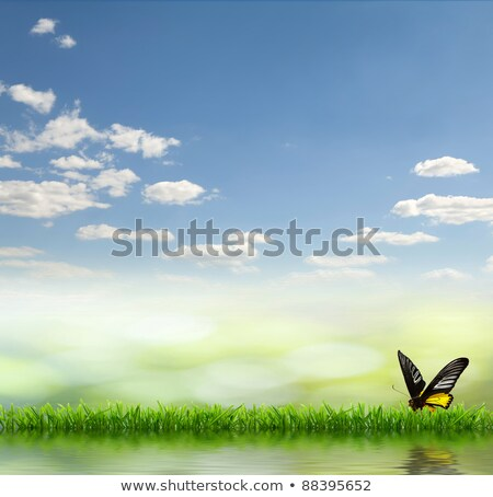 A garden under the clear blue sky with a butterfly Stock photo © bluering