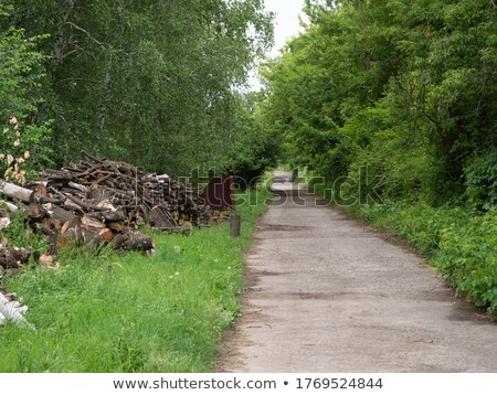 Long row of trees along a pathway Stock photo © artjazz
