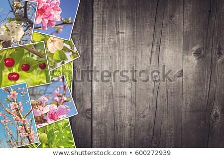 Вишневое · коллаж · фото · различный · листьев · свечей - Сток-фото © stevanovicigor