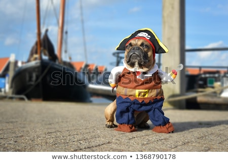 Boy looking at boats in harbour Stock photo © IS2
