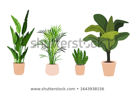 Groene kantoor plant pot geïsoleerd icon Stockfoto © studioworkstock