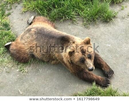 クマ · 草 · ヒグマ · 自然 · 戻る - ストックフォト © Juhku