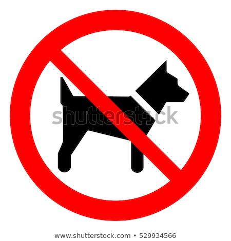 Nem kutyák megengedett felirat fickó mutat Stock fotó © jossdiim