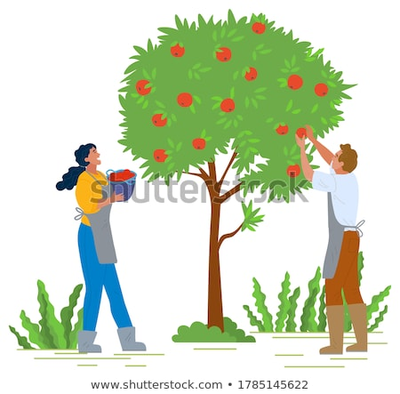 笑みを浮かべて · リンゴ · ピッキング · フルーツ · 優しい - ストックフォト © robuart