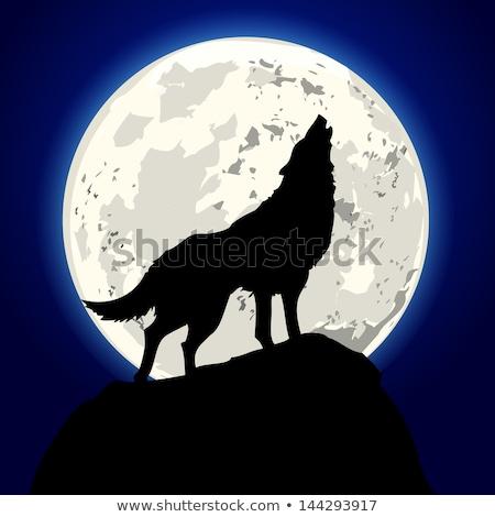 Hegy vad farkas sziluett rajz erdő Stock fotó © barsrsind