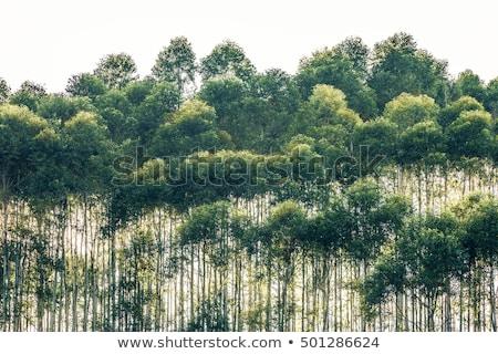 Rij bomen zon zonnige hout landschap Stockfoto © duoduo