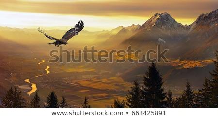 Eagle in the sky Stock photo © Anna_Om