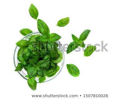 verde · basilico · fresche · isolato · bianco - foto d'archivio © frannyanne