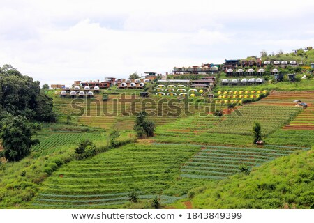 casa · de · campo · montanha · Tailândia · norte · céu · árvore - foto stock © pinkblue