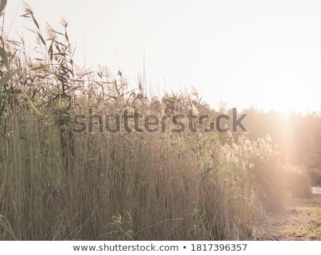 doğa · ışık · bambu · bitki · yansıma · yaşamak - stok fotoğraf © eltoro69