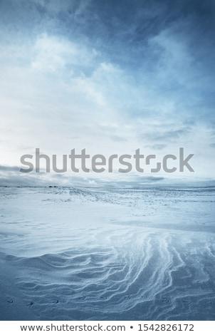 Blanco nieve campo invierno mundo maravilloso árbol Foto stock © Bertl123