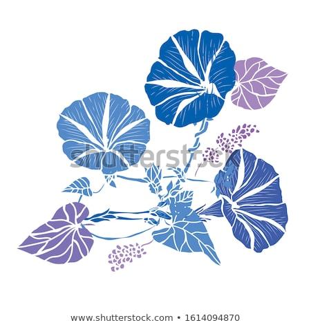 Manhã glória azul blue sky flor folha Foto stock © varts