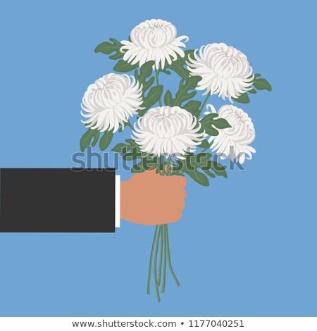 chrysanthème · fleurs · dessinés · à · la · main · vivre · grandes · lignes - photo stock © Concluserat