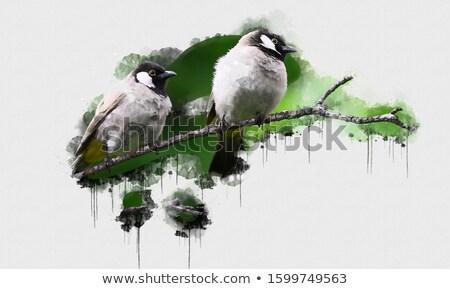 аннотация стилизованный дерево певчая птица изолированный clipart Сток-фото © heliburcka