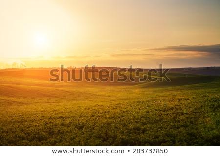 Landschap zonsondergang planten bloemen voorgrond hemel Stockfoto © Kayco