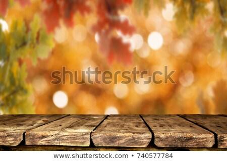 Caduta colorato foglie autunno ciliegio albero Foto d'archivio © olandsfokus