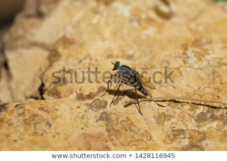 Enferrujado rocha rachado ferrugem mancha Foto stock © kimmit