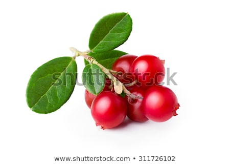 Cowberry isolated Stock photo © maxsol7