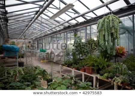 Greenhouse series - inside a greenhouse Stock photo © lightpoet