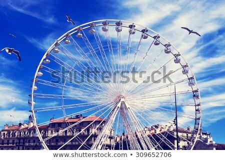 Mewy portu Marseille Francja pływające Zdjęcia stock © nito