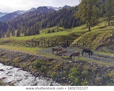 крутой тропе фермы гор животные Сток-фото © CaptureLight