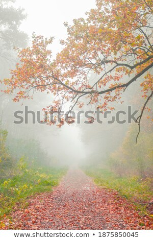 Zdjęcia stock: Autumn Forest Road In Red Leaves Towards Sun
