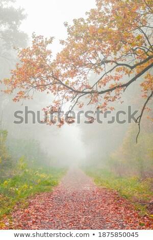 Zdjęcia stock: Jesienią · lasu · drogowego · czerwony · pozostawia · słońce