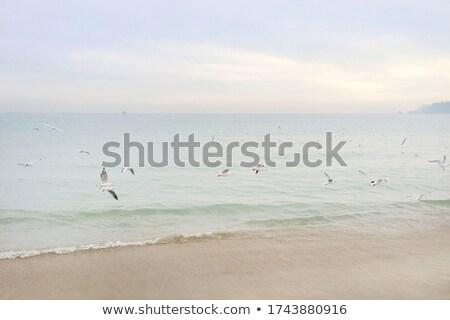 gaivota · aterrissagem · praia · pássaro · aves · cor - foto stock © photooiasson