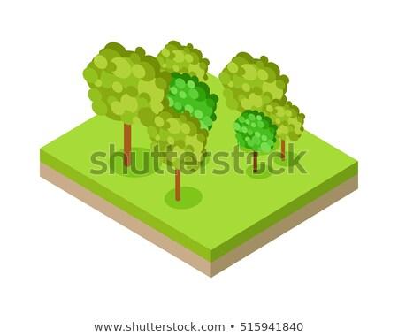 Forêt parc isométrique projection nature Photo stock © robuart