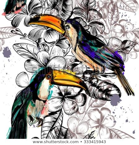 bonitinho · pássaro · transparente · ilustração · natureza · arte - foto stock © bluering