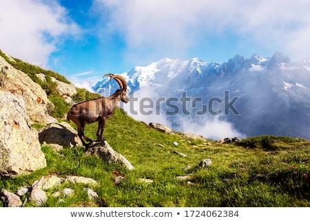 mont blanc massif in summer stock photo © antonio-s