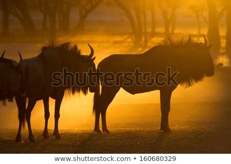 mavi · ayakta · Güney · Afrika · su · çim - stok fotoğraf © simoneeman