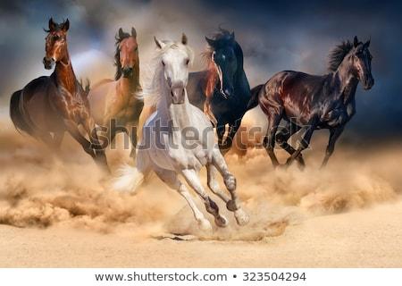 por · sétál · ló · homok · sekély · mélységélesség - stock fotó © fotoyou