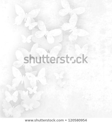 birkaç · kelebekler · beyaz · bahar · soyut · arka · plan - stok fotoğraf © get4net