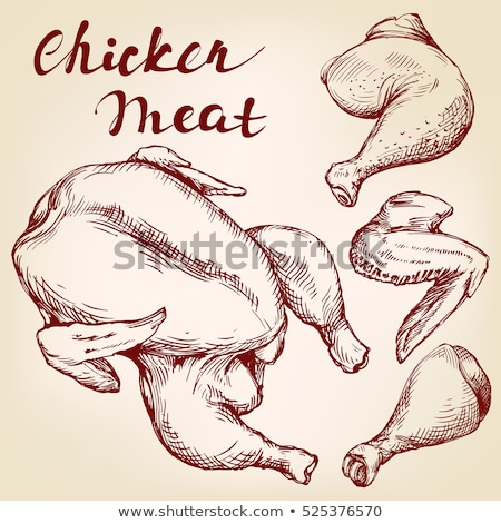 ストックフォト: 生 · 鶏 · 手描き · スケッチ · アイコン