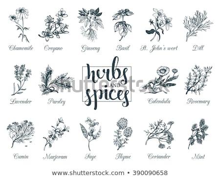 мудрец Spice трава Label заголовок мята Сток-фото © robuart